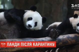Шанхайский зоопарк открыл для посетителей вольер с пандами