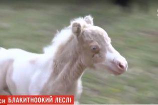 """У Харківському екопарку народилось мініатюрне """"плюшеве"""" лоша"""
