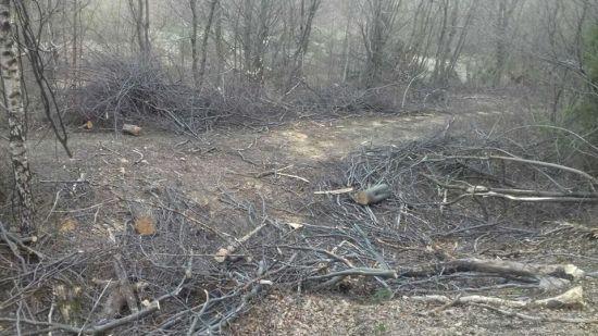 На українсько-польському кордоні виявили незаконну вирубку лісу