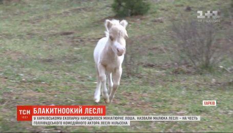 """Миниатюрный """"плюшевый"""" жеребенок родился в харьковском экопарке"""