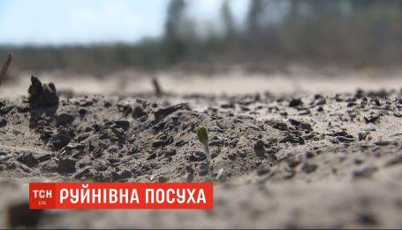 Через посушливу зиму, родючі чорноземи Полісся перетворились на пустелі