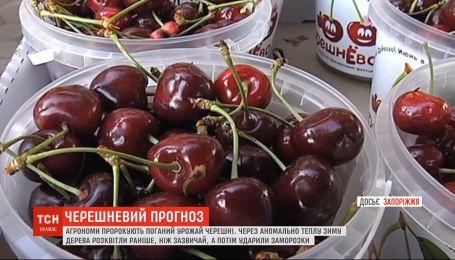 Весняні мороз: плоди черешні навряд чи порадують українців цього року