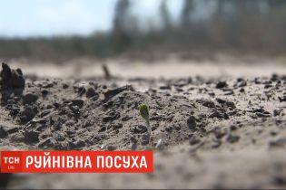 Из-за засушливой зимы, плодородные черноземы Полесья превратились в пустыни