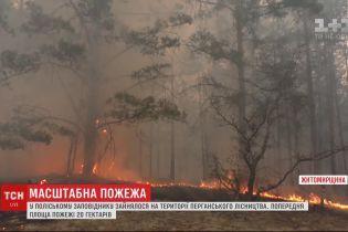 У Житомирській області в Поліському заповіднику здійнялась пожежа