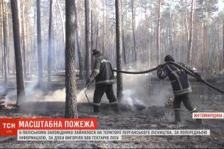 В Полесском заповеднике за сутки выгорело до 500 гектаров леса