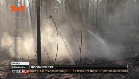 В Житомирской области снова горят леса: спасатели пытаются потушить огонь