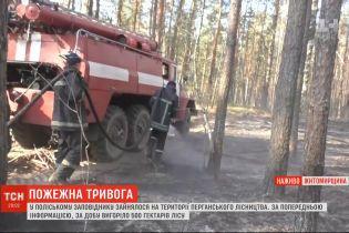 Знову палає: вогонь охопив пів тисячі гектарів заповідника у Житомирській області