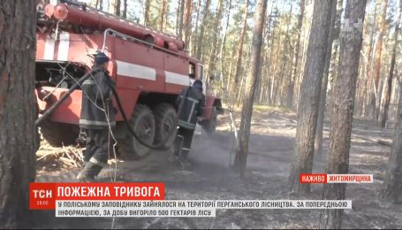 Опять пылает: огонь охватил полтысячи гектаров заповедника в Житомирской области