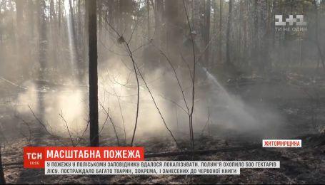У Житомирській області локалізували пожежу в Поліському заповіднику