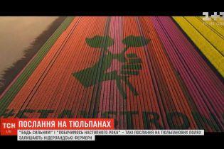 """""""Будь сильным"""": нидерландские фермеры оставляют послания на тюльпановых полях"""