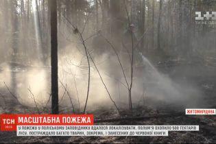 В Житомирской области локализовали пожар в Полесском заповеднике