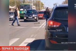 Дика качка з каченятами зупинили рух транспорту в Харкові