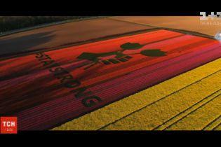 Фермеры оставляют различные послания на тюльпановых полях в Нидерландах