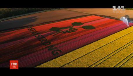 Фермери залишають різні послання на тюльпанових полях у Нідерландах