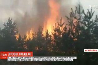Спасительный дождь: в Житомирской области удалось локализовать лесные пожары