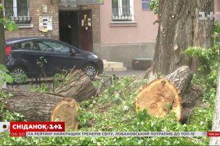 Чому в Україні обрубують дерева і як можна їх врятувати