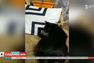 Як коти борються за місце на дивані: відео домашніх улюбленців наших глядачів