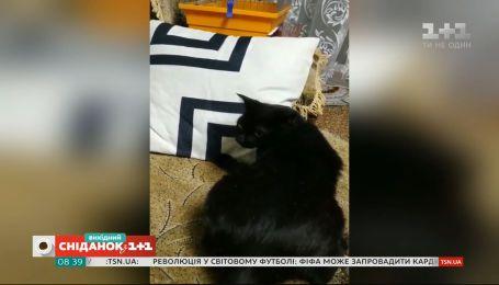 Как коты борются за место на диване: видео домашних любимцев наших зрителей
