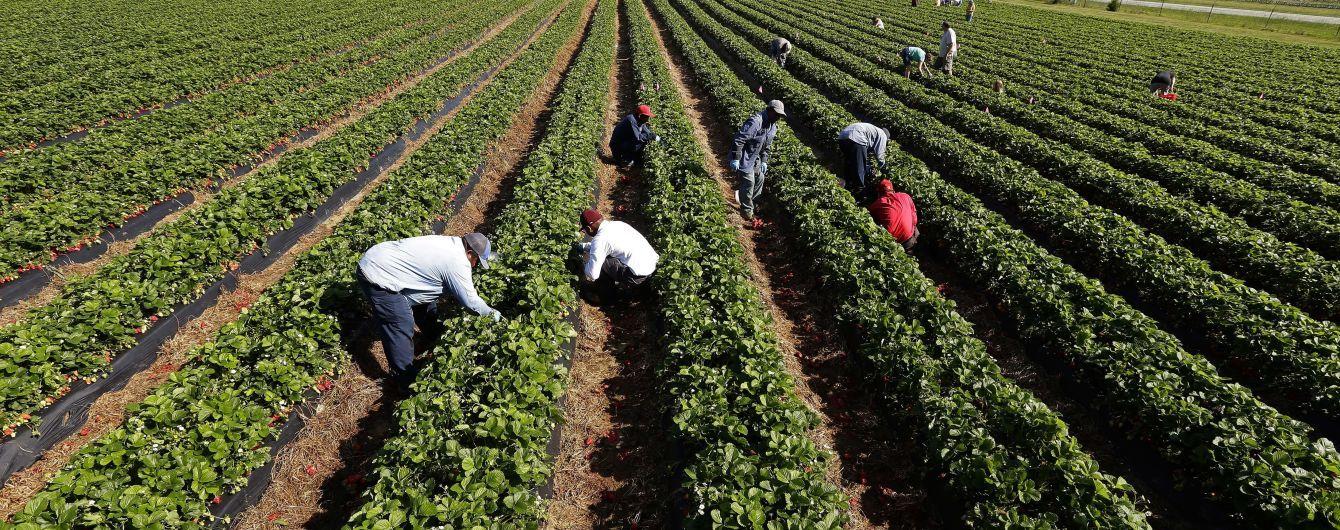 Відсутність українських заробітчан на полях Чехії ставить місцевий агробізнес на коліна – підприємці
