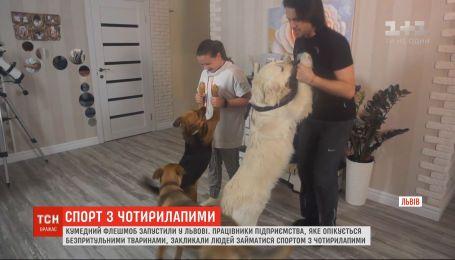 Спорт на всі чотири лапи: у Львові закликають займатися фізкультурою з домашніми улюбленцями