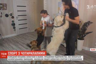 Спорт на все четыре лапы: во Львове призывают заниматься физкультурой с домашними любимцами