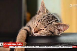 Коти розуміють мову людини – Поп-наука