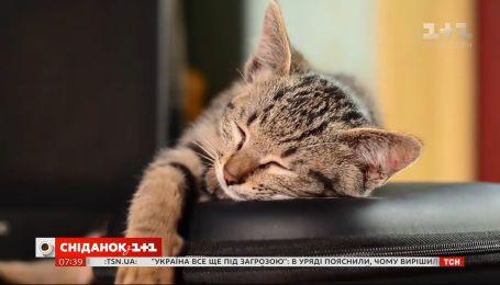 Коты понимают язык человека – Поп-наука