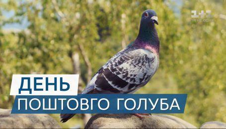 Пташки з характером: цікаві факти про поштових голубів