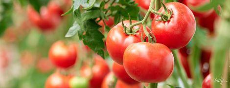 Малосольные помидоры: рецепт от Андрея Величко