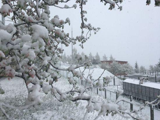 """Карпати засипало снігом: в Мережі опублікували фото """"зими"""" у травні"""