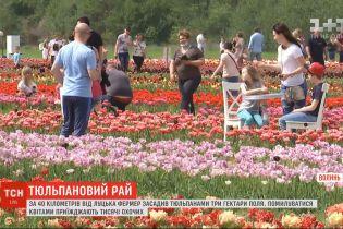 Вблизи Луцка фермер засадил три гектара поля тюльпанами