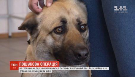 В Киеве несколько дней разыскивали пса, который вместе с армейцами ехал на фронт, но потерялся на вокзале