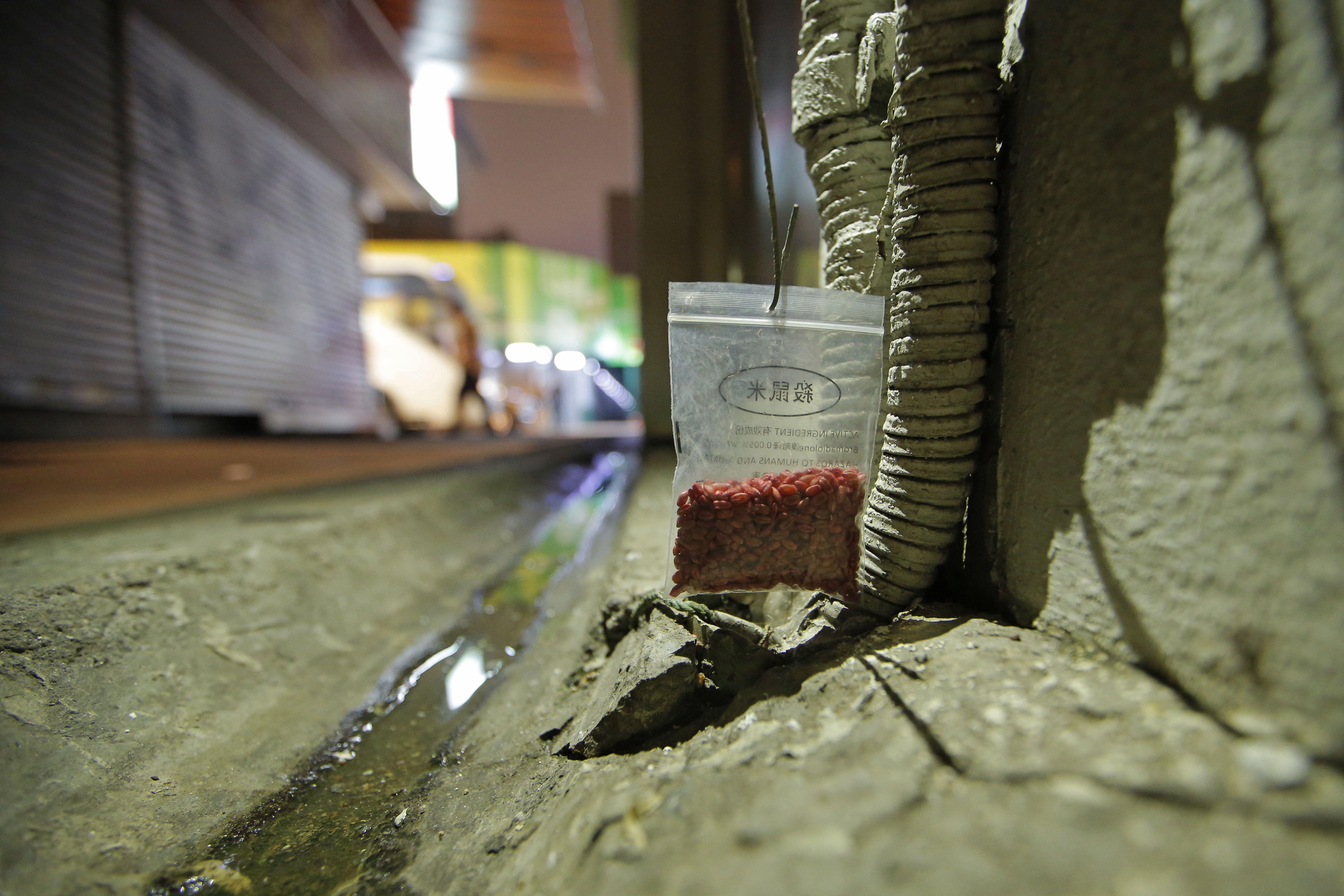 Щури в Гонконзі, щурячий гепатит_2