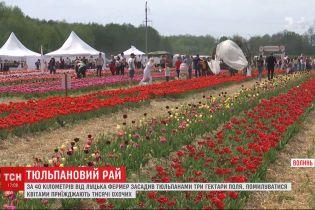 Тюльпановый рай: фермер высадил три гектара поля цветов