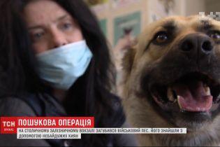 Неравнодушные киевляне помогли найти пса, который вместе с армейцами ехал на фронт, но потерялся на вокзале