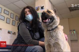 Потерялся на вокзале: киевляне помогли разыскать военного пса Винни