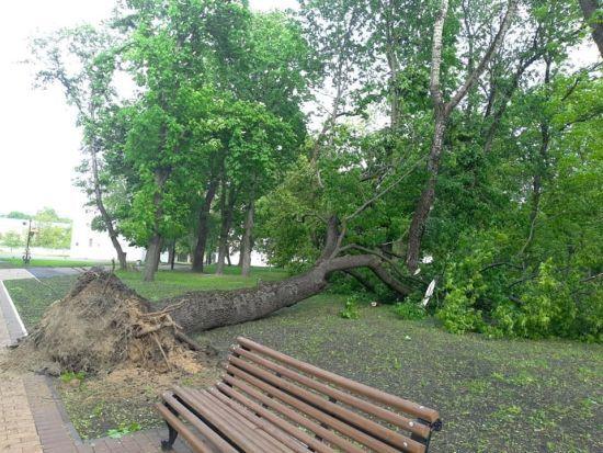 Наслідки негоди: у Львові дівчину вбило дерево, а у Рівненській області зривало дахи
