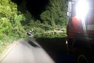 Ураганний вітер у Дніпрі валив дерева і блокував дороги