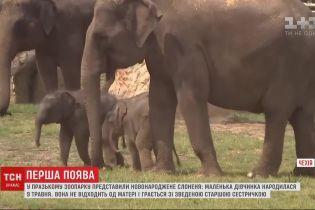 В пражском зоопарке представили новорожденного слоненка