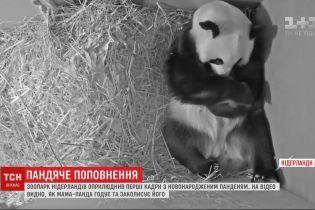 В зоопарке Нидерландов пополнилось семейство черно-белых панд