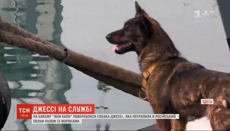 """Собака Джессі повернулась у свою військово-морську родину на буксир """"Яни Капу"""""""