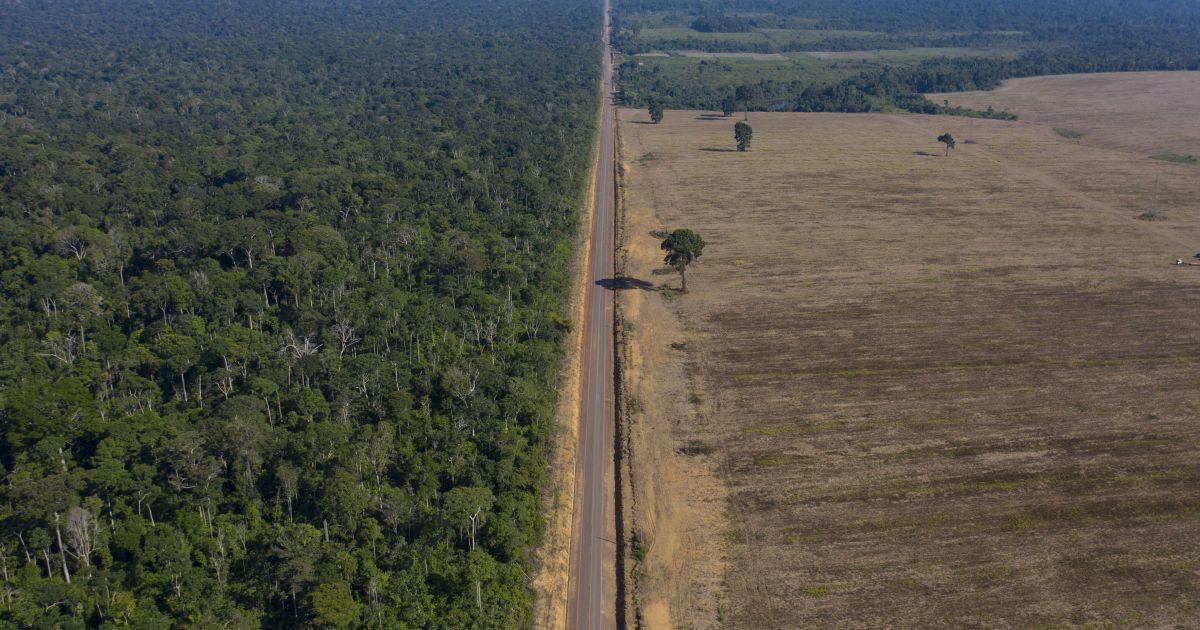 Амазония может стать очередной вирусной горячей зоной из-за вырубки лесов - ученый