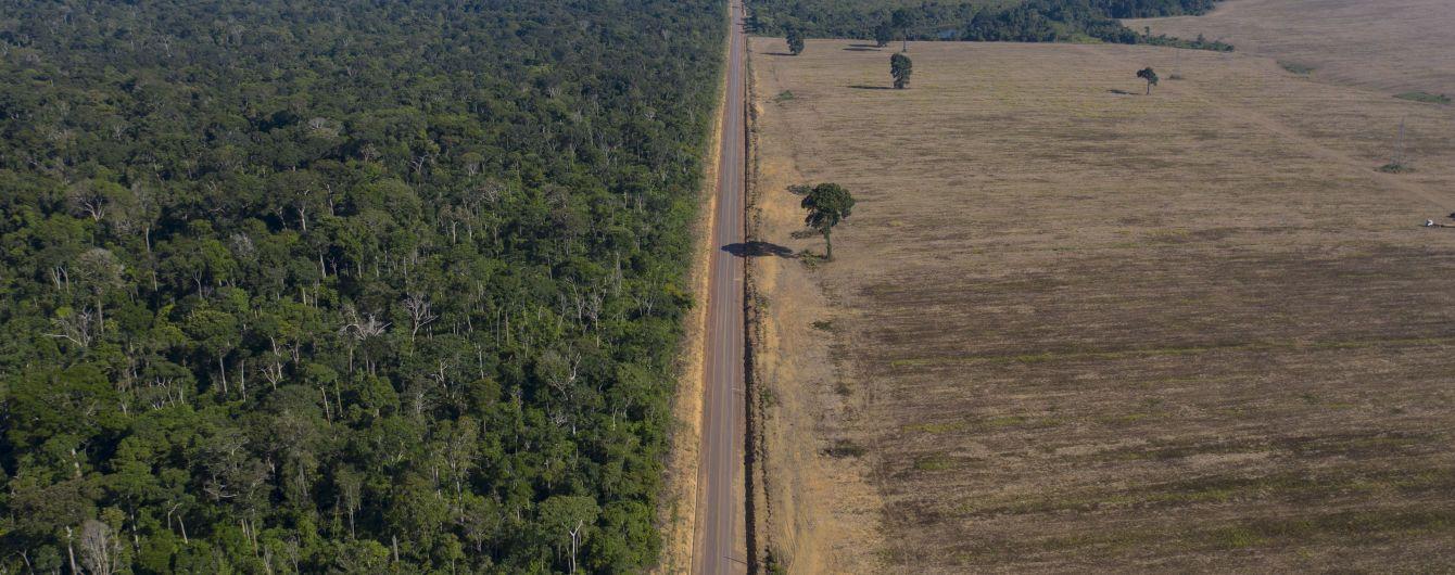 Посадка деревьев может причинить больше негативного влияния в борьбе с изменением климата