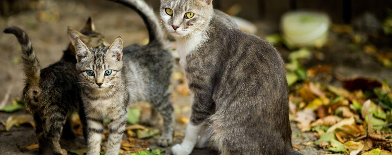 Зараженные кошки могут передавать COVID-19 другим представителям своего вида - исследование