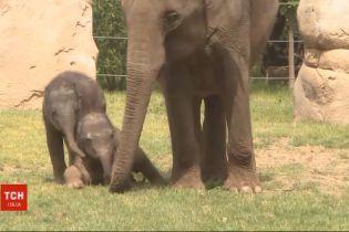Слоненок познакомился с публикой: в пражском зоопарке показали новорожденное животное