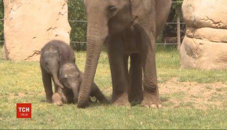 Слоненя познайомилось з публікою: упразькомузоопарку показали новонароджену тваринку