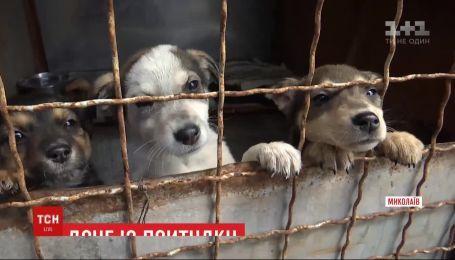 Жителі Миколаєва за 3 тижні розібрали по домівках більше 30 собак з притулку