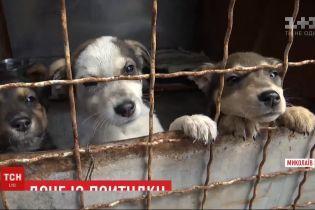 Жители Николаева за 3 недели разобрали по домам более 30 собак из приюта