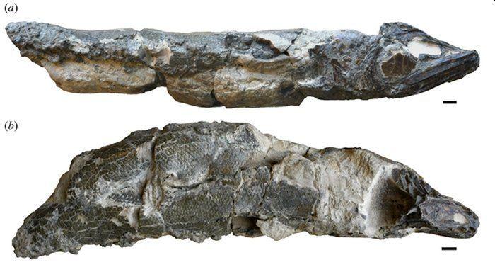 анчоус скам'янілості