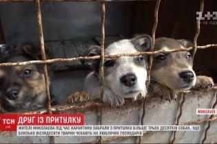 Жители Николаева за три недели разобрали по домам более 30 собак из приюта